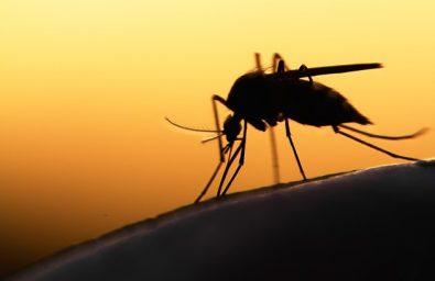 mosquito-adobestock